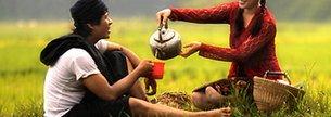 лечебные свойства чай ройбуш